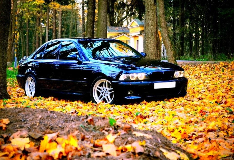 Черная Bmw e39 на фоне листвы